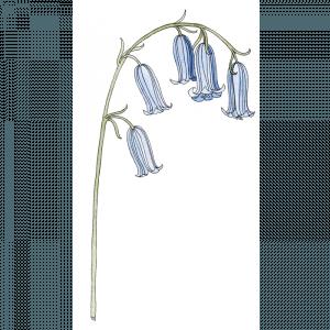 bloemenparadijs-voorbeeld-2