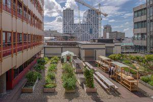 Urban gardening Utrecht